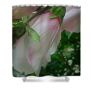 Lovely White And Pink Flowers Shower Curtain