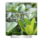 Lovely Wings Shower Curtain
