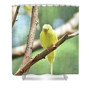 Lovely Yellow Budgie Parakeet In The Wild Shower Curtain