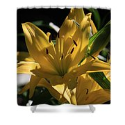 Lover's Lilly II Shower Curtain