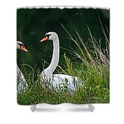 Loving Swans Shower Curtain by Clayton Bruster