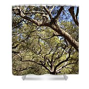 Low Angle View Of Trees In A Park Shower Curtain