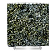 Low Tide Seaweed Shower Curtain