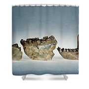 Lower Jawbones Shower Curtain