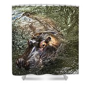 Lu The Homosassa Hippo Shower Curtain