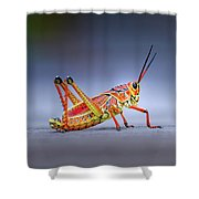 Lubber Grasshopper Shower Curtain