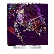 Lucane Kite Female Darling Beetle  Shower Curtain