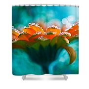 Lucid Shower Curtain