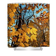Luminous Leaves Shower Curtain