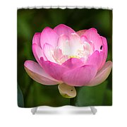 Luminous Lotus Blossom Shower Curtain