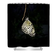 Luminous Paper Kite At Rest Shower Curtain
