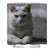 Lumpy Shower Curtain