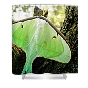 Luna Moth No. 3 Shower Curtain