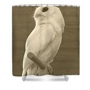 Luna The Rescued White Leucistic Eastern Screech Owl In Sepia Shower Curtain