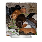 Lunch Bunch Shower Curtain