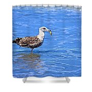 Lunchtime At Coronado Beach Shower Curtain