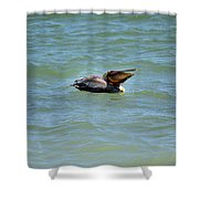 Lunchtime Pelican  Shower Curtain