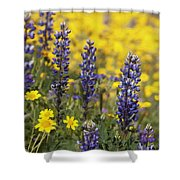 Lupin And Daisies Shower Curtain