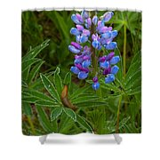 Lupin And Guest Shower Curtain