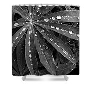 Lupin Leaves With Rain Drops  Shower Curtain