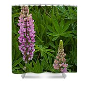 Lupin Siblings Shower Curtain