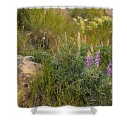 Lupine Among The Weeds  Shower Curtain