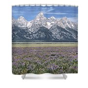 Lupine And Grand Tetons Shower Curtain by Sandra Bronstein