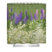 Lupine Bright Shower Curtain