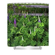 Lupine Fencerow Shower Curtain