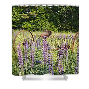 Lupine Festival - Sugar Hill New Hampshire Usa Shower Curtain