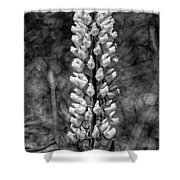 Lupine In Black And White Shower Curtain