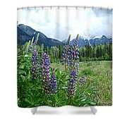 Lupine In The Alpine Shower Curtain