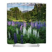Lupine In The Valley Shower Curtain