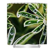 Lupine Leaves Decorated With Dew Drops Shower Curtain