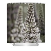 Lupine Muted Shower Curtain