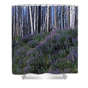 Lupine On Mt. Washburn - Yellowstone Shower Curtain
