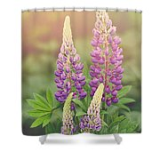Lupine Sunrise Shower Curtain