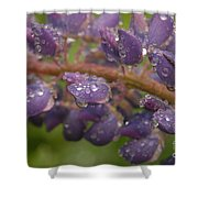 Lupine With Raindrops Shower Curtain