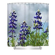 Lupines Against The Sky Shower Curtain