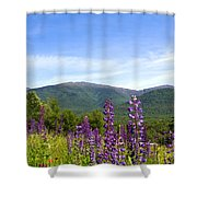 Lupines And The Presidentials Shower Curtain