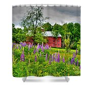 Lupines And The Red Barn Shower Curtain