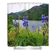 Lupines And Water Shower Curtain