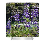 Lupines At The River Shower Curtain