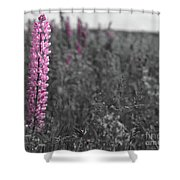 Lupins 2016 27a Shower Curtain