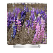 Lupins 2016 28a Shower Curtain