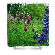 Lupins 2016 4 Shower Curtain