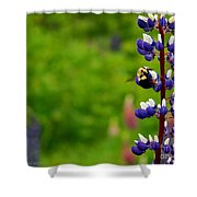 Lupins 2016 7 Shower Curtain