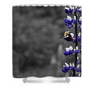 Lupins 2016 7a Shower Curtain