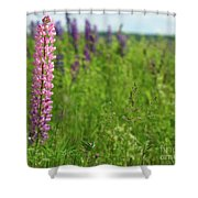 Lupins 27 Shower Curtain