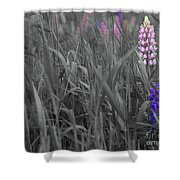 Lupins 30 Shower Curtain